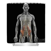 The Psoas Muscles Shower Curtain