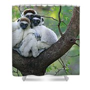 Verreauxs Sifakas Cuddling Shower Curtain