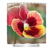 Viola Named Penny Red Blotch Shower Curtain