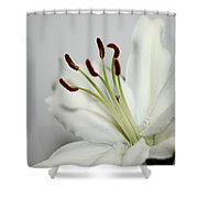 White Lily In Macro Shower Curtain