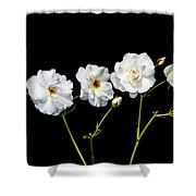 5 White Roses On Black Shower Curtain