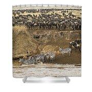 Wildebeests Crossing Mara River, Kenya Shower Curtain