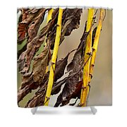 Wilted Flower  Shower Curtain by Tommytechno Sweden