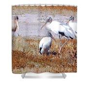 Wood Storks Shower Curtain