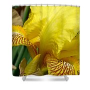 Yellow Iris Shower Curtain