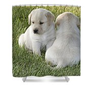 Yellow Labrador Puppy Shower Curtain by Linda Freshwaters Arndt