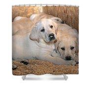 Yellow Labrador Retriever Puppies Shower Curtain