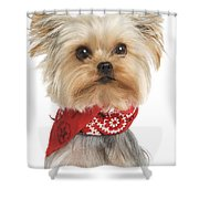 Yorkshire Terrier Dog Shower Curtain