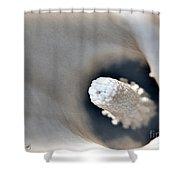 Zantedeschia Named Mozart Shower Curtain