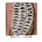 50 Fish From American Waters Shower Curtain by Georgia Fowler