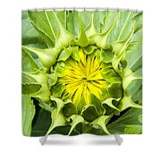 5319 Shower Curtain