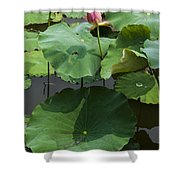 5322 Shower Curtain