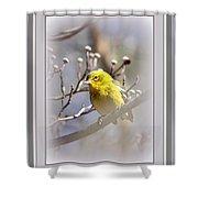 5393-006 - Pine Warbler-fb Shower Curtain