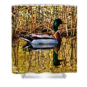 5.4.2014 Wild Mallard Shower Curtain