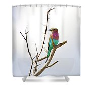 African Birds Shower Curtain