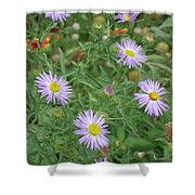 6 Asters Left Shower Curtain