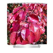 Autumn Color Shower Curtain