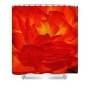 Begonia Named Nonstop Apricot Shower Curtain