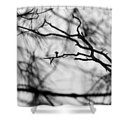 Bird In Tree Shower Curtain