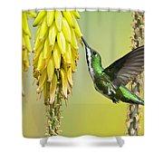 Black-throated Mango Shower Curtain