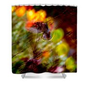 Bohemian Waxwing Shower Curtain