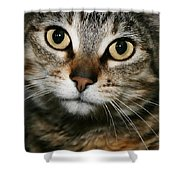 Brown Tabby Shower Curtain