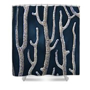 Coral Design Shower Curtain
