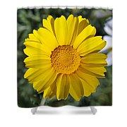 Crown Daisy Flower Shower Curtain