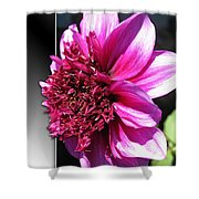 Dahlia Named Blue Bayou Shower Curtain