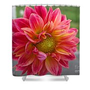 Dahlia Named Brian's Sun Shower Curtain
