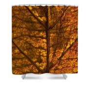 Dogwood Leaf Backlit Shower Curtain