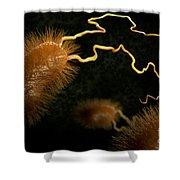 Escherichia Coli Bacteria Shower Curtain