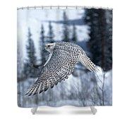Faucon Gerfaut Falco Rusticolus Shower Curtain