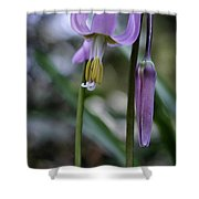 Fawn Lily Shower Curtain