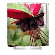 Fuchsia Named Roesse Blacky Shower Curtain