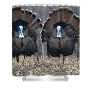 Jake Eastern Wild Turkeys Shower Curtain