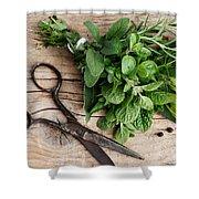 Kitchen Herbs Shower Curtain by Nailia Schwarz