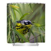 Magnolia Warbler Shower Curtain