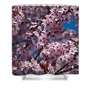 Plum Tree Flowers Shower Curtain