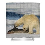 Polar Bear With Fresh Kill Shower Curtain