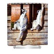 Ring Tailed Lemurs Shower Curtain