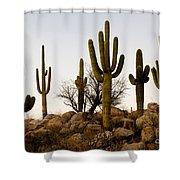 Saguaro Cacti Shower Curtain