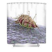 Scabies Mite Shower Curtain