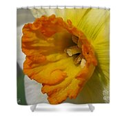 Small-cupped Daffodil Named Barrett Browning Shower Curtain