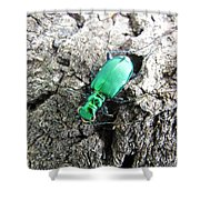 6 Spotted Tiger Beetle Shower Curtain
