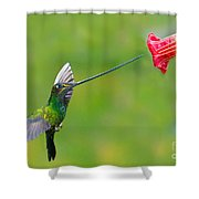 Sword-billed Hummingbird Shower Curtain