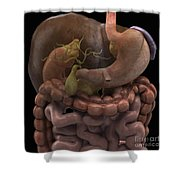 The Gallbladder Shower Curtain