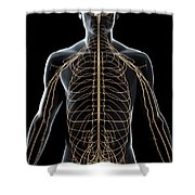 The Nerves Of The Upper Body Shower Curtain