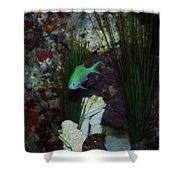 Tropical Fish Shower Curtain