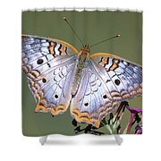 White Peacock Butterfly Shower Curtain